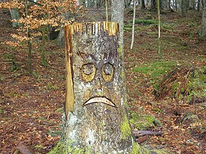 English: Sad Face in Wooplaw Woodland