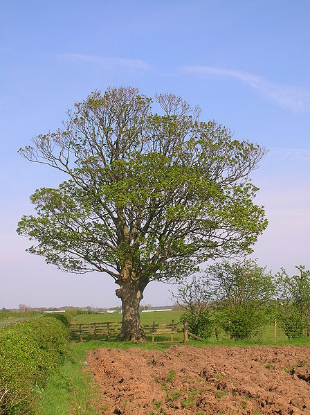 File:Selena's Tree.JPG