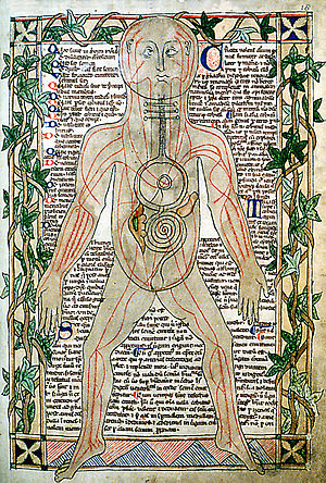 13th century anatomical illustration showing t...