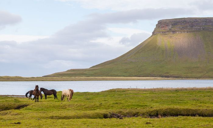 Búlandshöfði, Vesturland, Islandia, 2014-08-14, DD 085