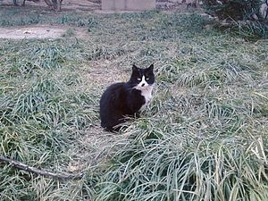 a feral cat in Beijing
