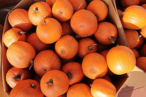 English: Pumpkins for sale photography by russ...