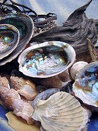 Barang-barang yang dianggap indah dan bernilai, seperti kerang ini, pernah dijadikan sebagai alat tukar sebelum manusia menemukan uang logam.