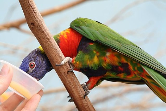 Family Fun in Pittsburgh - Visit the National Aviary - Click over for Carpe Travel's list of 10 fun things to do in #Pittsburgh with kids.