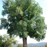 El árbol en la llanura