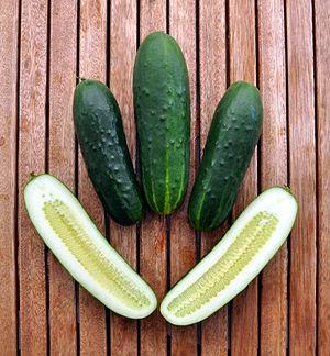 English: Nostrano cucumber