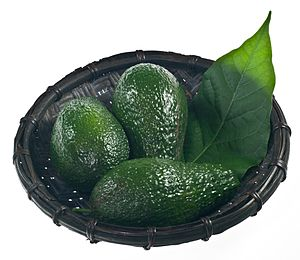Fruits of avocado (Persea americana)