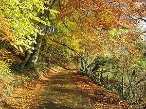 English: English country lane in Autumn.