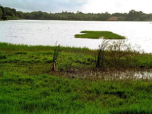 Mysore's Kukkarahally Lake, source of inspirat...