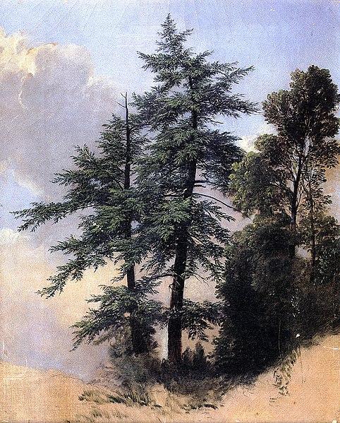 File:Nature Study Trees Newburgh New York Asher B Durand.jpeg