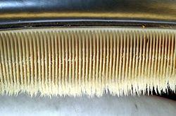 Foto yang memperlihatkan lempeng balin. Lempeng tersebut digunakan untuk menyaring makanan dari air