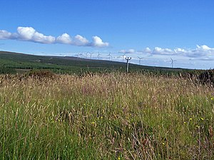 English: Waving grasses Lush grasses in the su...