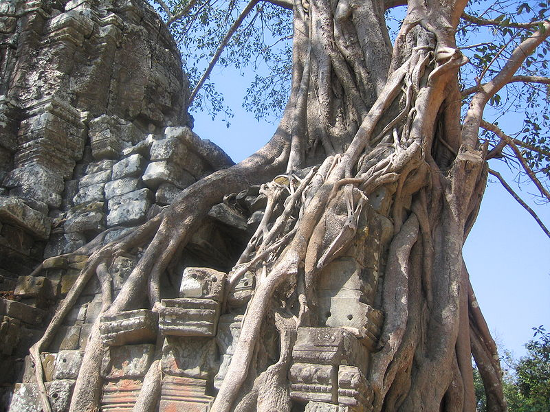 Datei:Angkor 2005 3.JPG