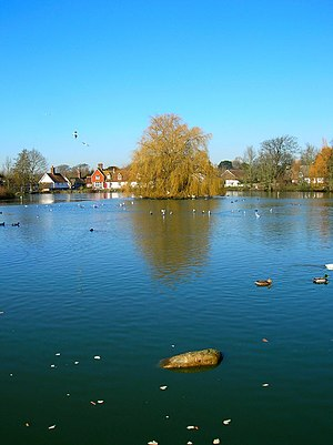 English: Falmer Pond Large village pond betwee...