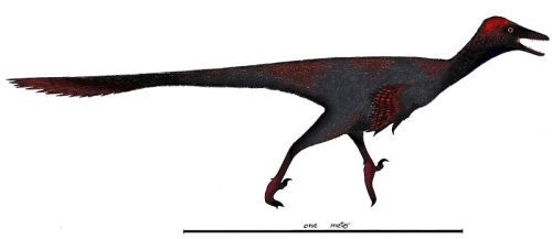 File:Gobivenator Restoration.jpg