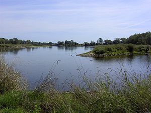 Oder River at the estuary of the Neiße River i...