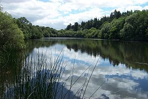 Llyn Syberi. A peaceful rarely frequented lake...