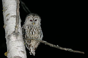 This photo shows an owl perched at a tree bran...