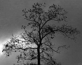 English: Image of tree with birds.
