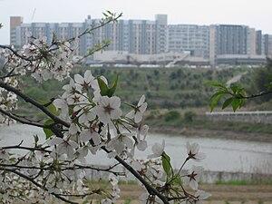 Kyushu University - ITO new campus in spring