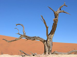 Dead tree in the clay pan of the Deadvlei, Sos...