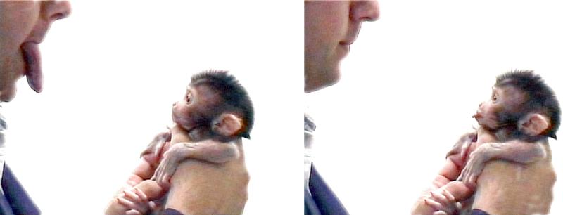 Primate recién nacido imitando expresiones humanas