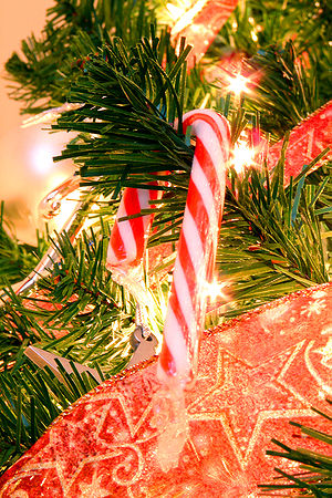 A candy cane hanging on a Christmas tree