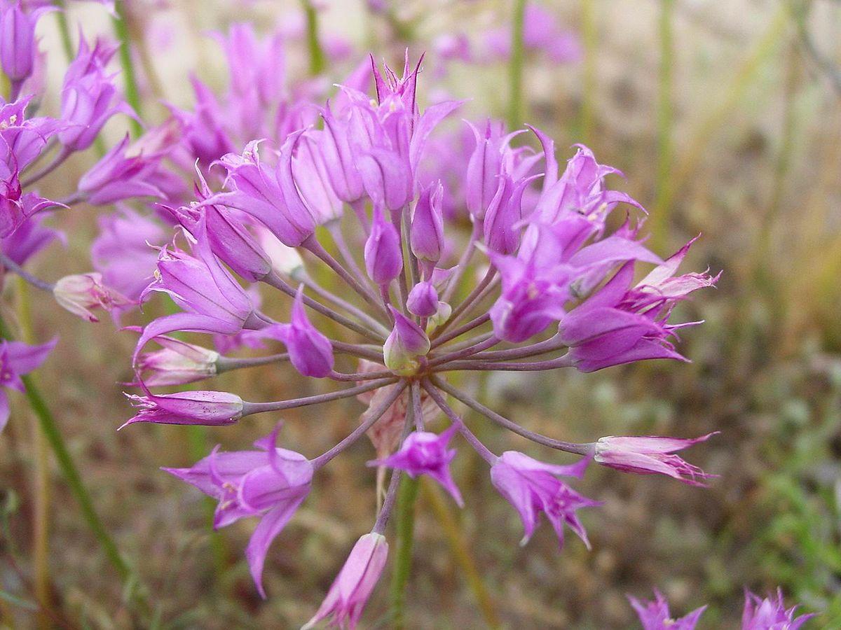 Tall Stalk Purple Flowers