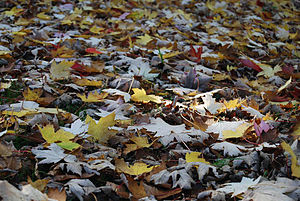 English: Fallen Autumn Leaves at an Arboretum ...