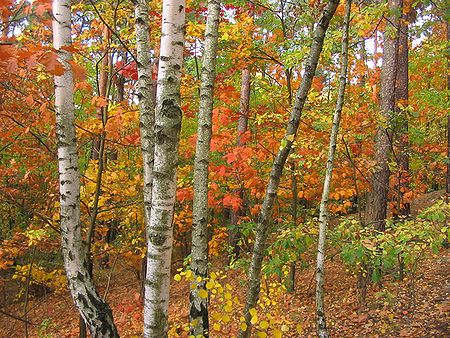 Image result for fall foliage site:wikipedia.org