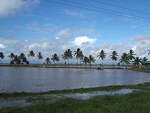Tractor in rice field, Guyana Tractor_in_field...