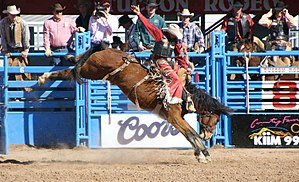 "English: Bronco rider at the Tucson, AZ ""..."