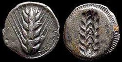 Moneda representando una espiga de cebada, simbolo de riqueza de la ciudad de Metaponto, en la Magna Grecia.