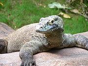 Dragão de Komodo.