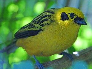 A yellow bird icon