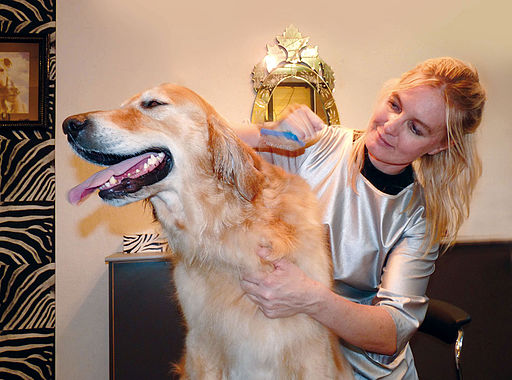 TIKITA-TOILETTAGE-2 should you groom your dog