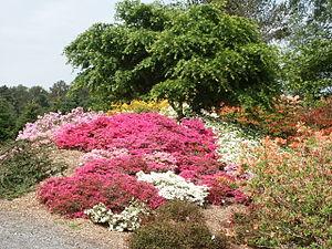 English: Arboretum, Milde, Bergen, Hordaland, ...