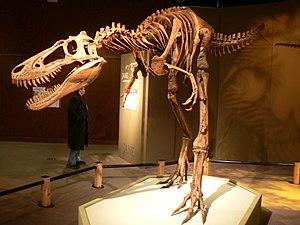 """Jane"" specimen, Cleveland Museum of..."