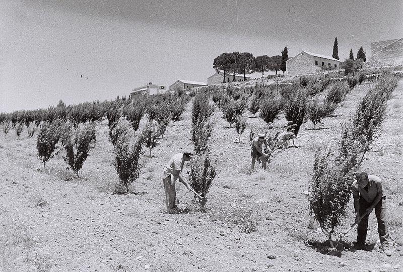 File:Kfar Etzion 1947.jpg