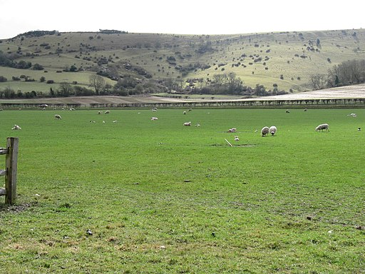 Sheep and lambs at Plumpton College - geograph.org.uk - 1768845