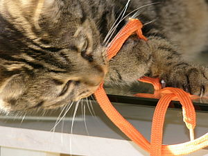 A cat playing with a orange lace