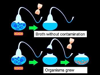 Illustration of swan-necked flask experiment u...