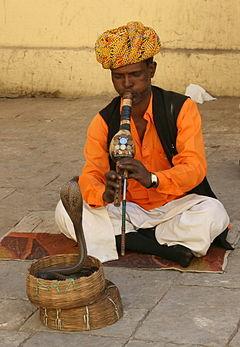 JaipurSnakeCharmer20080213a