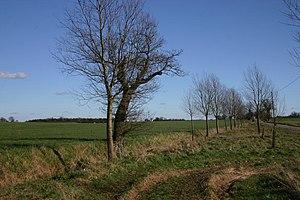 English: Roadside verge near Guilt Cross Young...