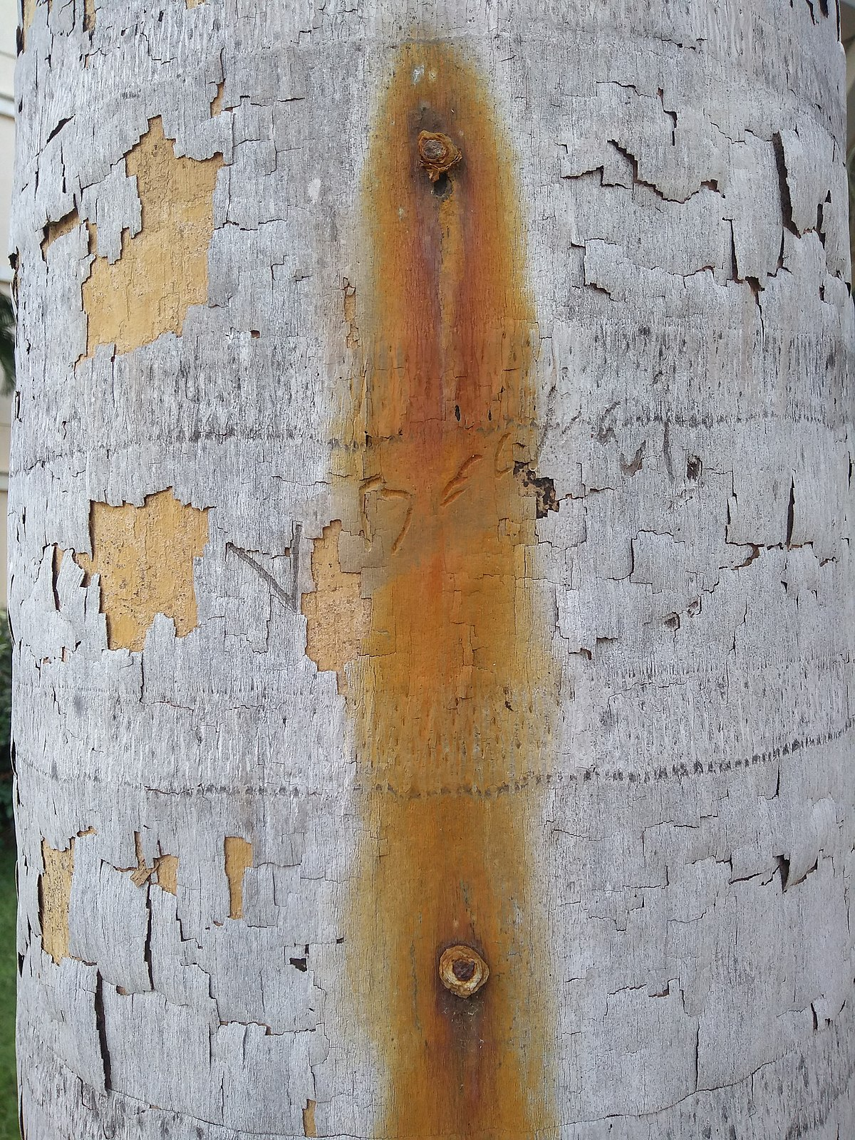 Tree Spiking Wikipedia