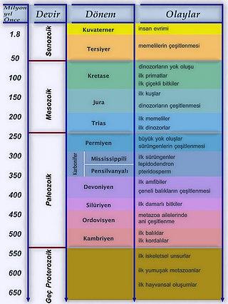 650 milyon yıl öncesinden günümüze evrim çizelgesi