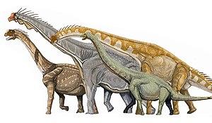 Camarasaurus, Brachiosaurus, Giraffatitan, Euh...