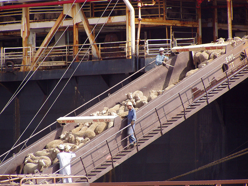 File:Sheep Ship 3.jpg