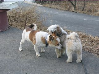 https://i2.wp.com/upload.wikimedia.org/wikipedia/commons/thumb/2/28/Twodogs_sniffing.jpg/320px-Twodogs_sniffing.jpg