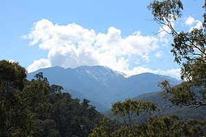 English: Mount Buller from the Howqua Valley